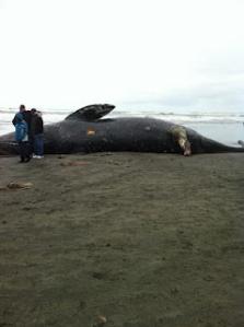 Dead Whale 1