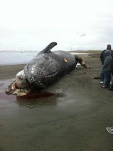 Dead Whale 2