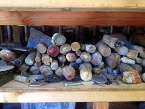 More gorgeous petrified wood! Holleywood Ranch, Sweet Home, Oregon