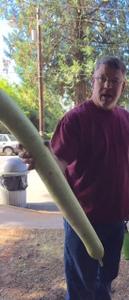 "David was amazed at the size of this ""Snake Gourd""! Apple Harvest Festival, Onalaska, WA"