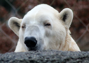 Darn kids, get off my lawn. Point Defiance Zoo, Tacoma