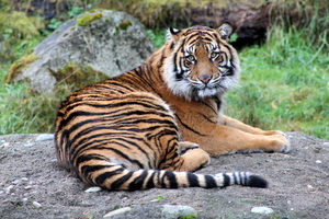 I am the King, Point Defiance Zoo, Tacoma